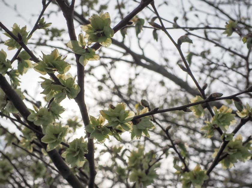 Bute Blossoms