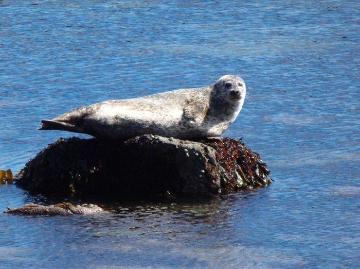 bute seal